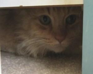 Oliver under the bed