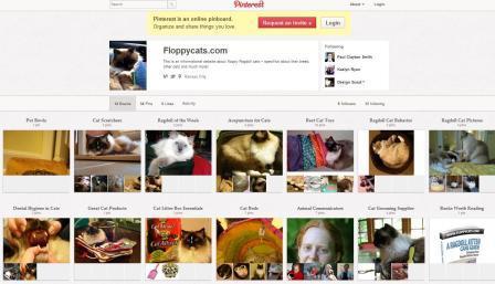 Floppycats on Pinterest