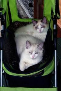 The boys in their Catmobile