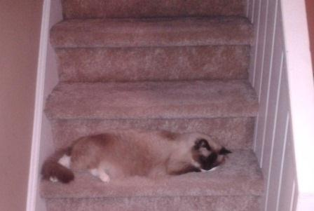 Oliver on Stairs