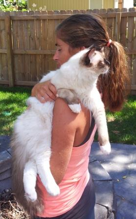 How to Hold a Ragdoll Kitten over the shoulder standing up