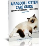 Grab a FREE Copy of A Ragdoll Kitten Care Guide!