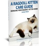 FREE eBook Copy of A Ragdoll Kitten Care Guide!
