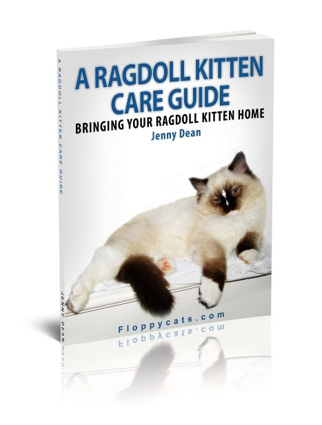 A Ragdoll Kitten Care Guide in Paperback