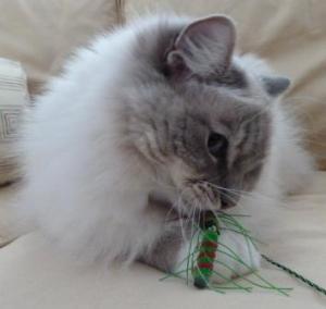 Trigg with Neko Flies Cat Toy Kattipede