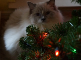 This was taken by my fiance's sister, Jen, during Christmas and I just love it!  Sonny loved the Christmas tree and was really sad when we had to take it down.
