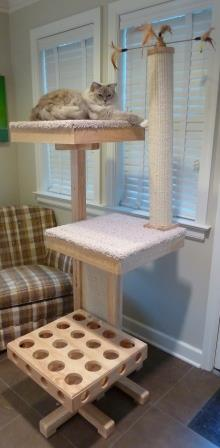 Cat Power Tower Modern Cat Tree Review with Ragdoll Cat Trigg