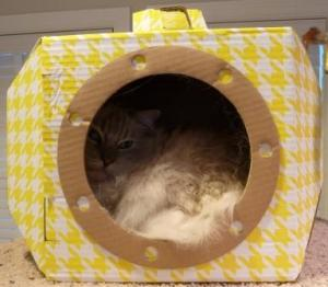 Louie's Box Designer Submarine Cat Box Bed Review Trigg