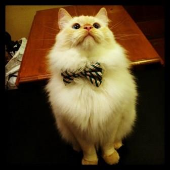 Regardless, he's quite the dapper gentleman.