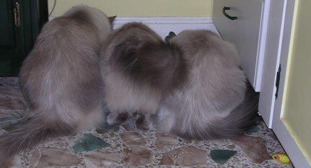 Cats2005 053