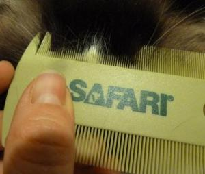 Safari Double-Sided Flea Comb by Coastal Pet Products Review - Floppycats