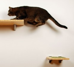 Itch Step by the Square Cat Habitat