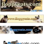 Happy Belated 8th Birthday, Floppycats!