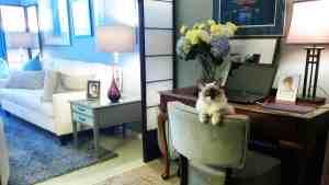 Zoe - Ragdoll Kitten of the Month 4