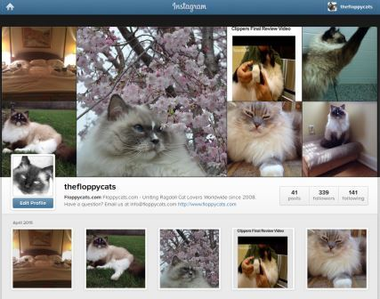Floppycats on Instagram