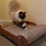 Cat Claws 101: Why Cats Use Their Front Claws