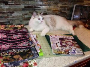 The Great Catsby - Ragdoll of the Week 3
