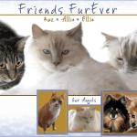 Cat Blogger: Friends FurEver