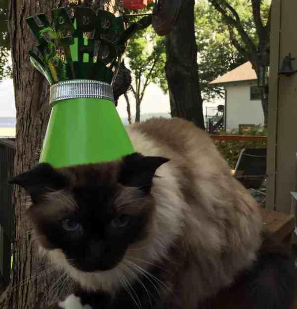 Caymus Birthday August 2015