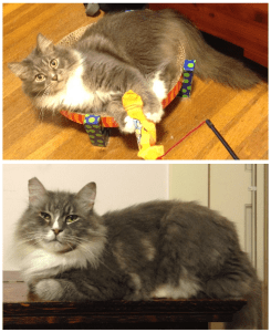 Overcoming Cat Allergies with Homeopathy  Prince and Jasper