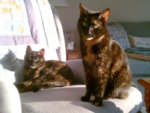 Allegra and Ruby of The Conscious Cat