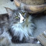 Timmie – Floppycat of the Week