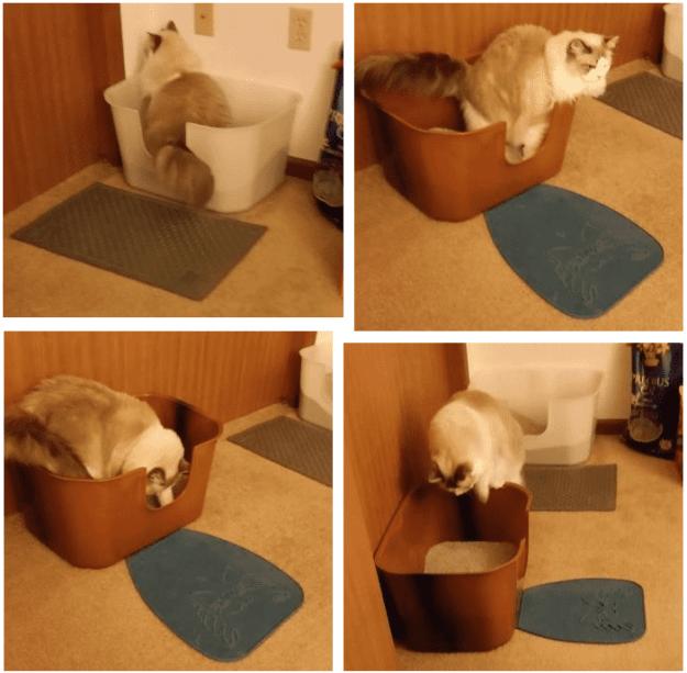 September 2015 NVR Miss High Wall Cat Litterbox Giveaway Winner Reports Back