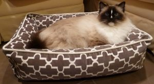 Bowsers Pet Bed Urban Lounger Product Review 4