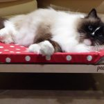 Peach Pet Lounger Cat Hammock Product Review