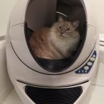 YouTube Litter Robot Open Air Video