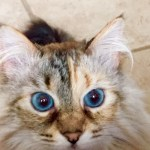 Coco Beans – Floppycat of the Week