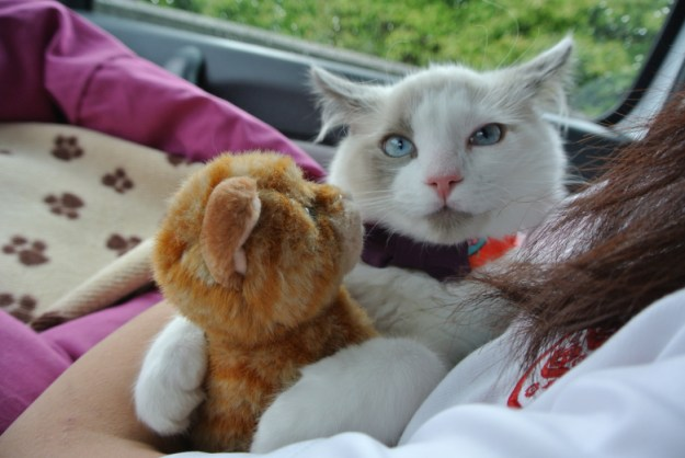 Oliver with cat doll June 14
