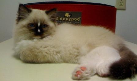 Charlie and the SleepyPod