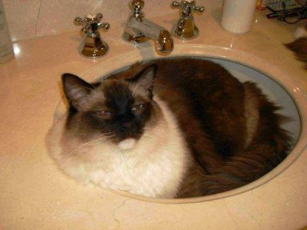 Caymus in Sink