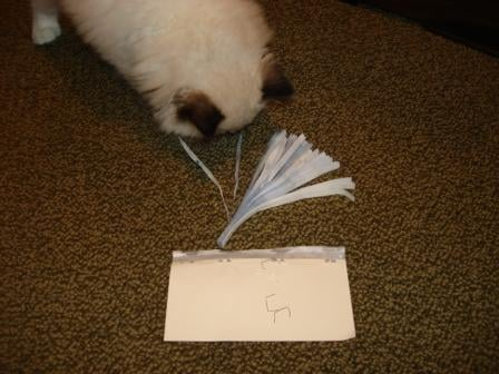 Make Your Own Cat Toy - Step 6