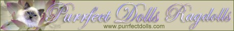 Purrfect Dolls banner
