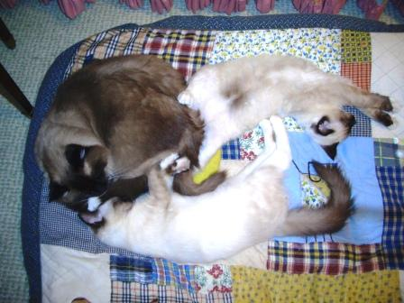 Caymus, Murphy and Rags Sleeping on Dog Bed