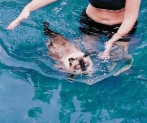 Rags Swimming