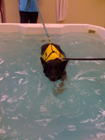 Tucker's First Swim Therapy