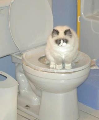 Diva on Toilet