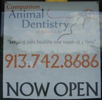 Companion Animal Dentistry of Kansas City