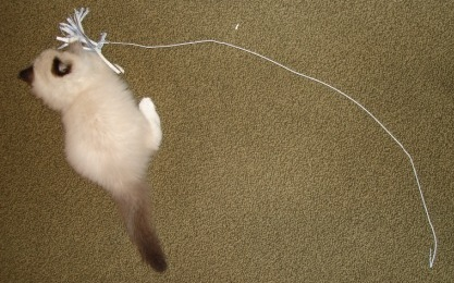 Make Your Own Cat Toy - Step 9
