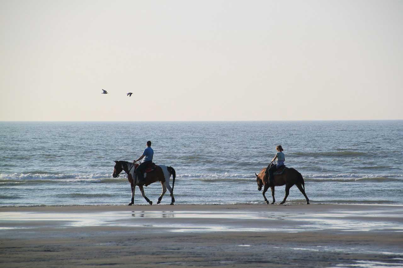 How to Ride a Sensitive Horse How to Ride a Sensitive Horse new pics