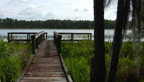 Off a dirt road in the Arbuckle Tract in Lake Wales Ridge State Forest is pretty little Lake Godwin.