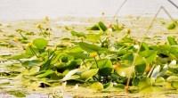 Profitez du printemps pour immortaliser les plantes aquatiques au bord d'un cours d'eau, d'un lac, dans un marais ou d'un étang et gagnez un week-end nature pour deux personnes ou […]