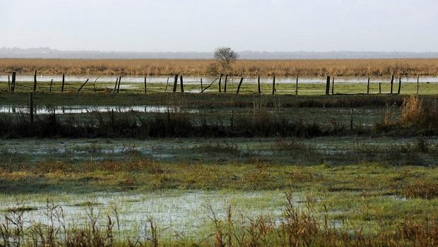 Dans les cartons depuis quelques années, le projet de création d'une Réserve Naturelle Nationale dans l'estuaire de la Loire en est ressorti sur l'impulsion de la Ministre de l'Écologie. Le […]