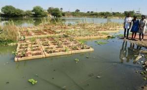 Plants on the 'flolating treatment wetland' help to clean the lake by absorbing nitrates in the water. | Photo Credit: Nagara Gopal