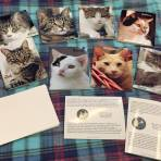 Covie Cat Greeting Cards