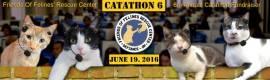 Catathon 2016