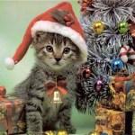Kitty Christmas 2016